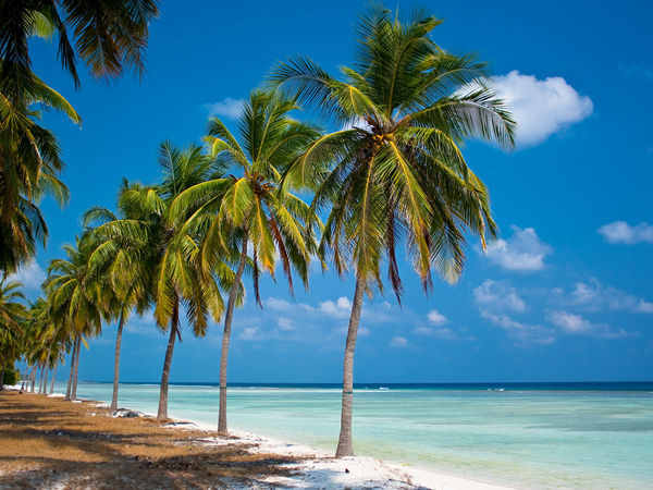 Lakshadweep_Lakshadweep_Palm-trees-and-the-deep-blue-sea-at-Lakshadweep